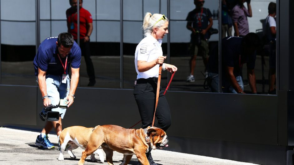 Lewis Hamilton's dogs, Spa-Francorchamps, 2016