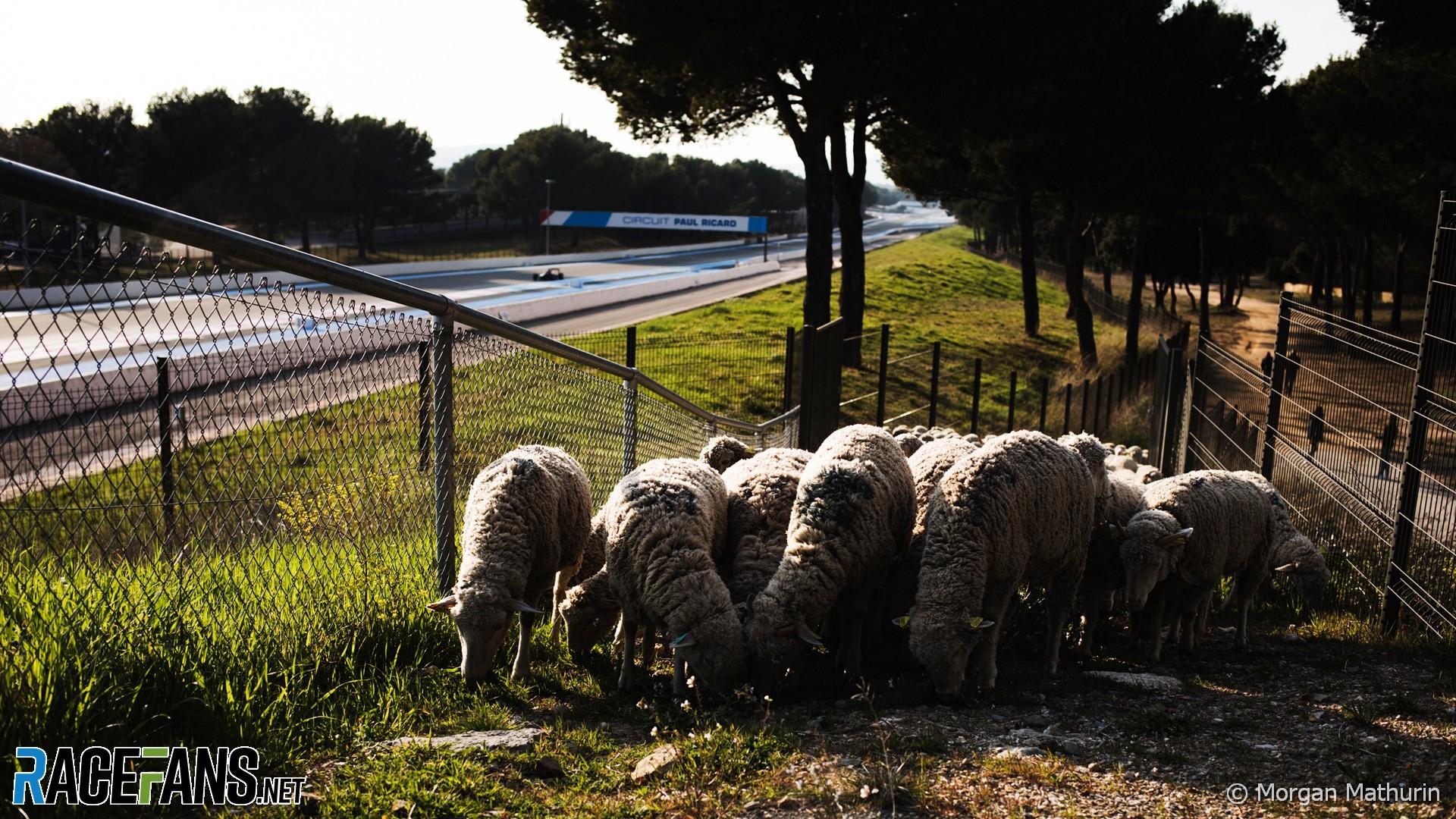 Sheep, Paul Ricard, 2021